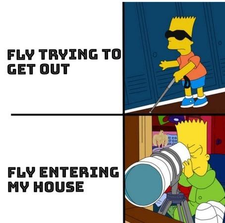 Bzz bzz - meme
