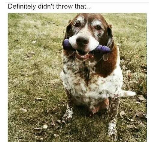 I threw that !! - meme