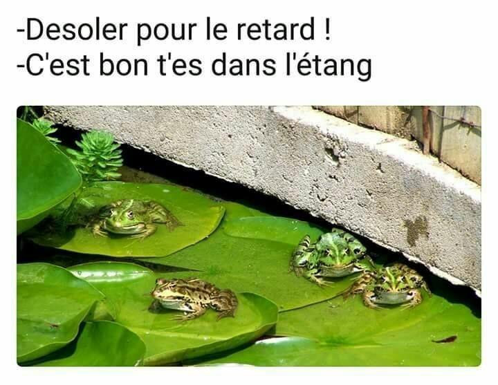 Crapaud - meme