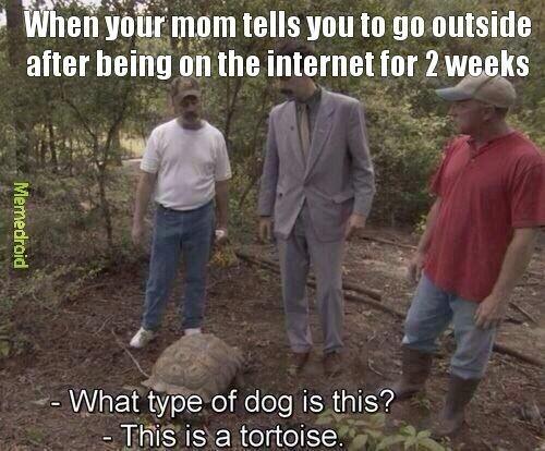 Odd looking dog - meme