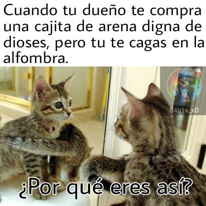 589d19cbcf9f0 top memes de por que eres asi? en español ) memedroid