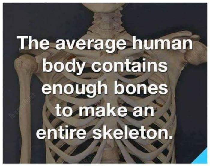 This joke is pretty HUMERUS - meme