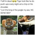Tiger vs kangaroo