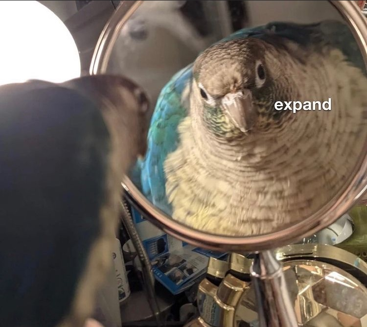 fat bird - meme