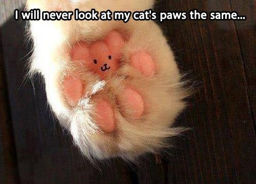 Here kitty kitty kitty... - meme