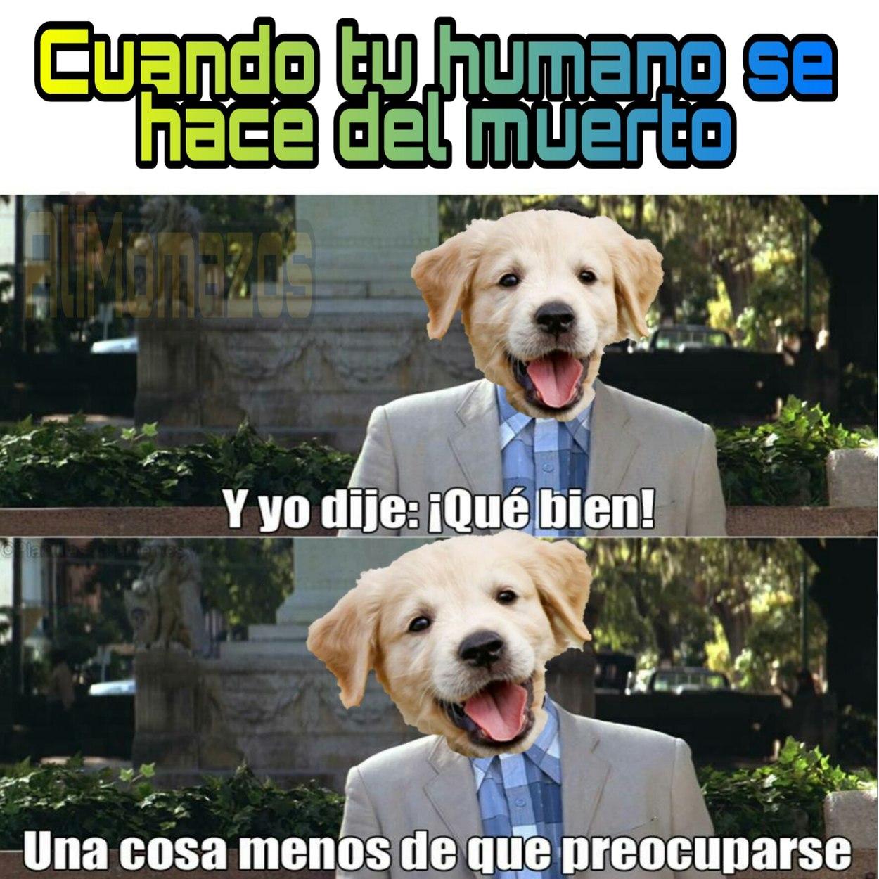 Morite gil - meme
