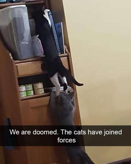 cat army - meme