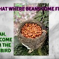 The legendary BeanBird