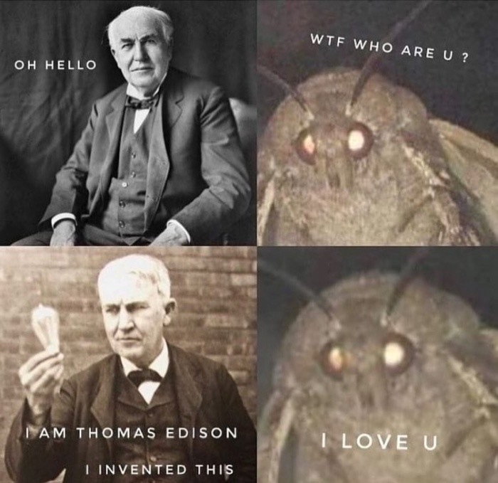 Edison is love for most of moths - meme