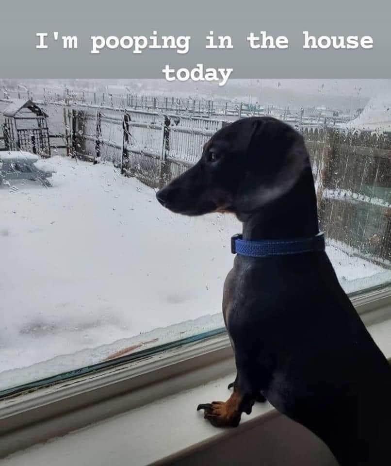 Me too doggo, me too - meme