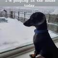 Me too doggo, me too