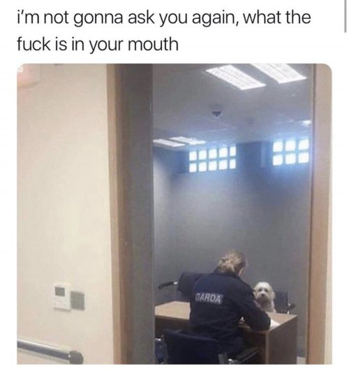 he's a good boy - meme
