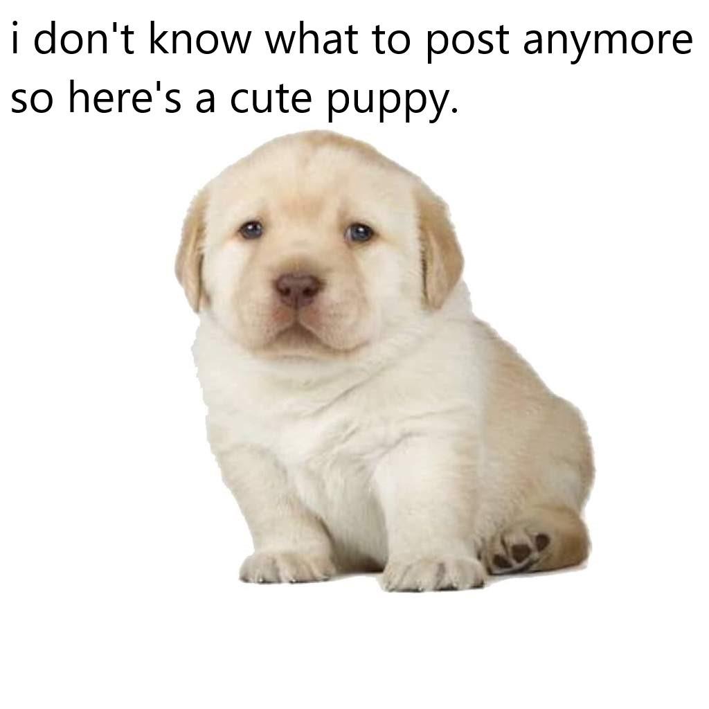 pup - meme