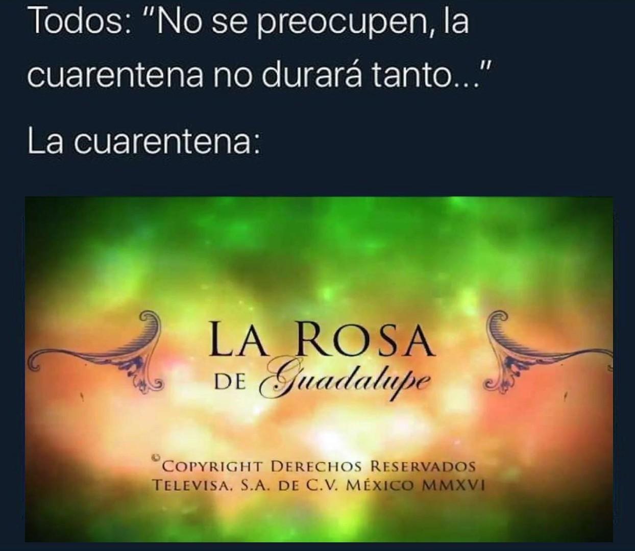 rosa - meme