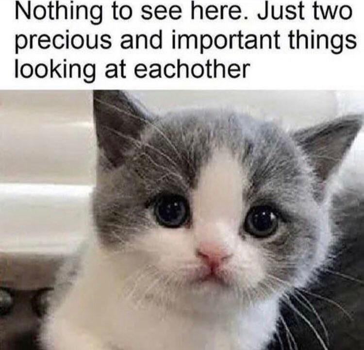 The Best Kitty Memes Memedroid