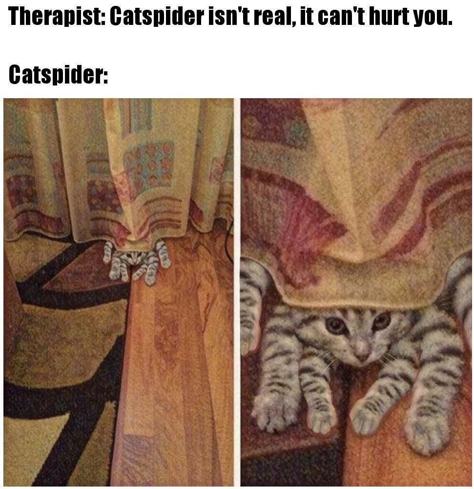Catspider - meme
