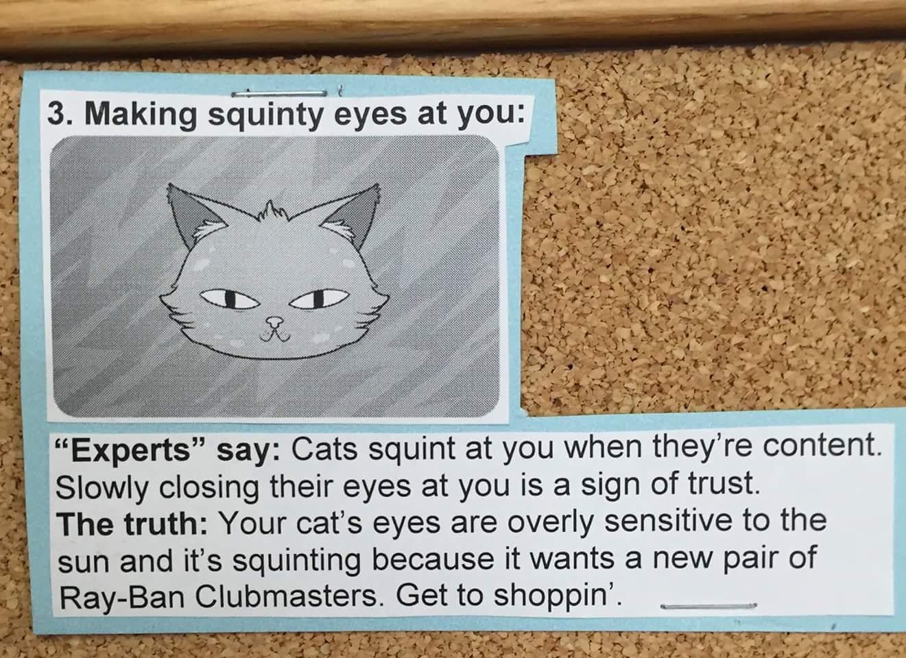 Cats 103 - meme
