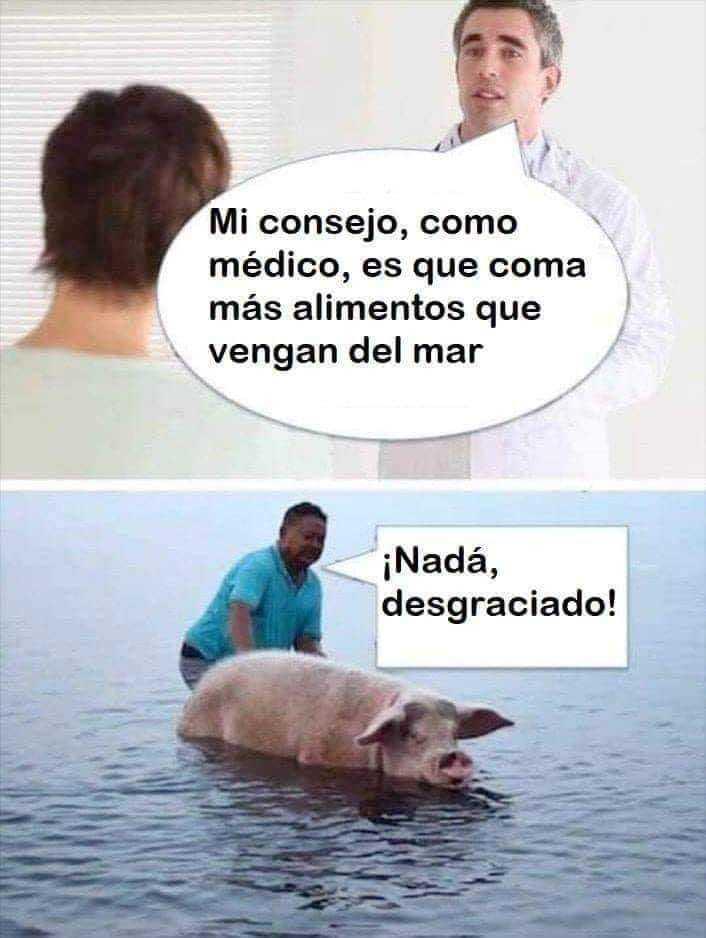 cerdo de mar - meme