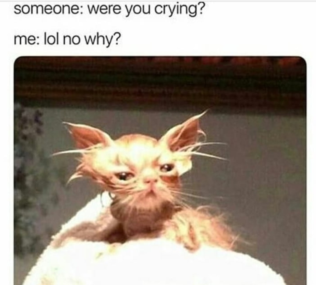 Sad cattu - meme