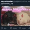 Rato = love
