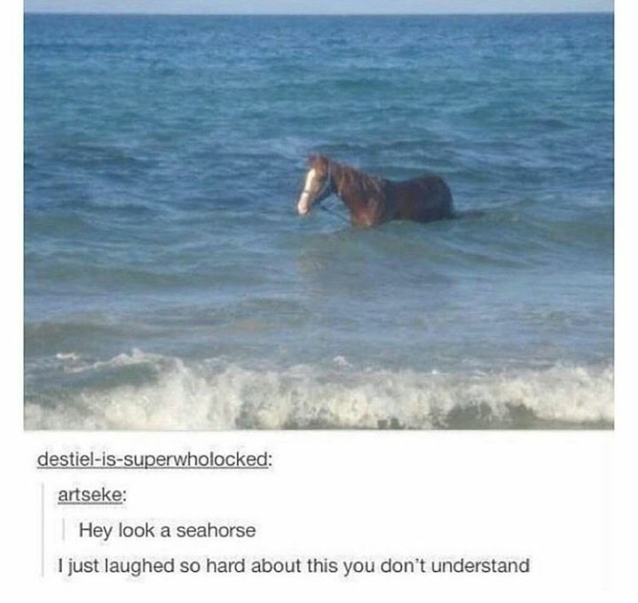 If thats a sea horse then there must be a sea lion - meme