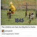 Big Bird will always win the race