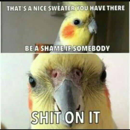 ENGAGE MR BIRDY - meme
