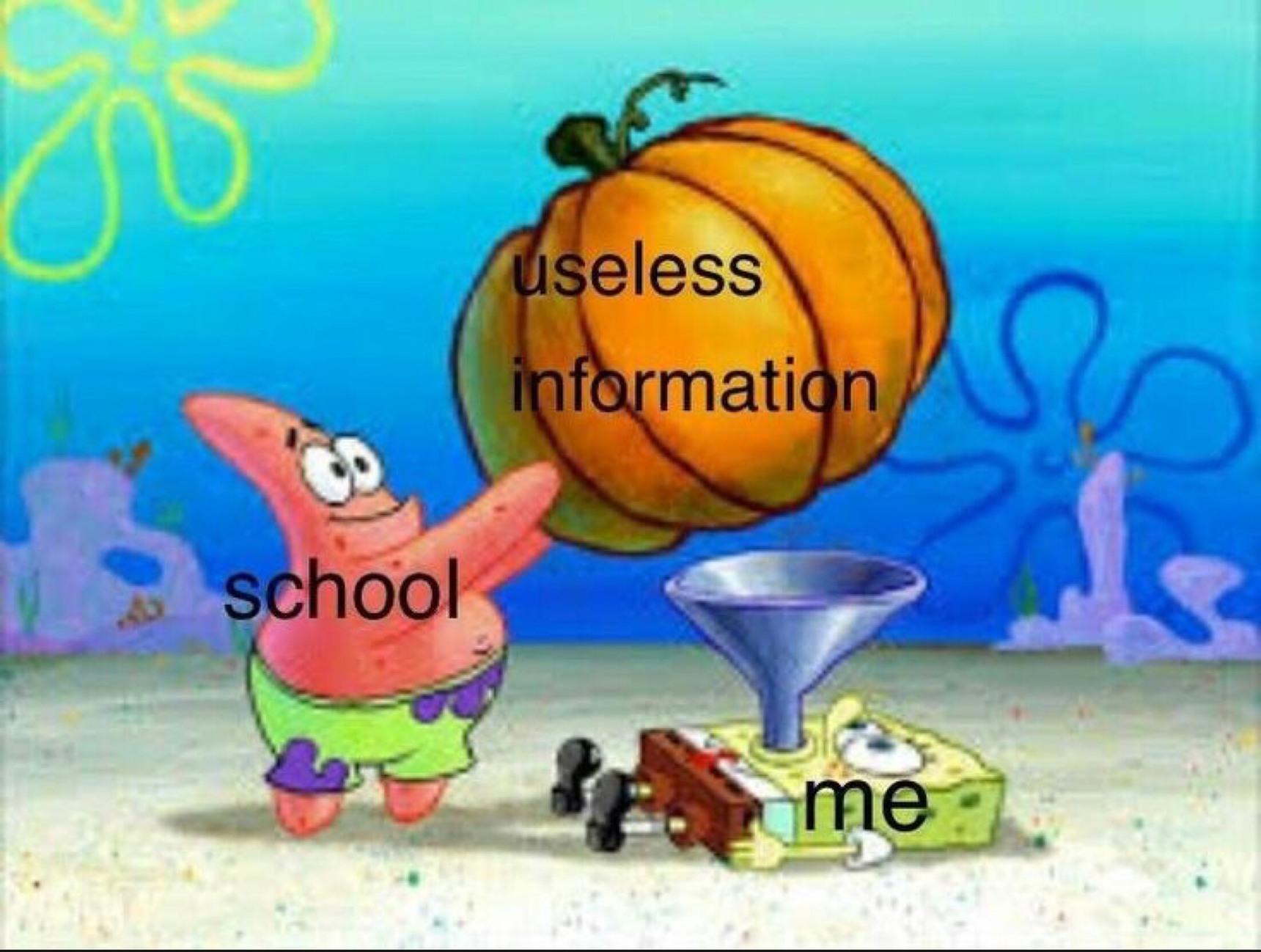 school = useless - meme