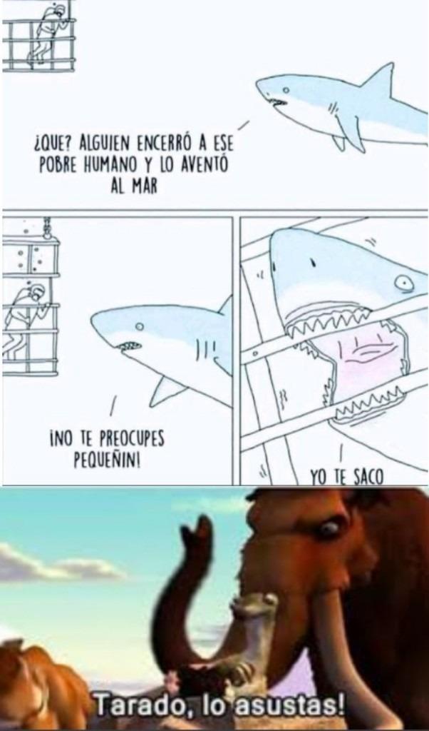 Tiburón tarado - meme
