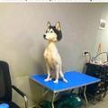Pauvre chien