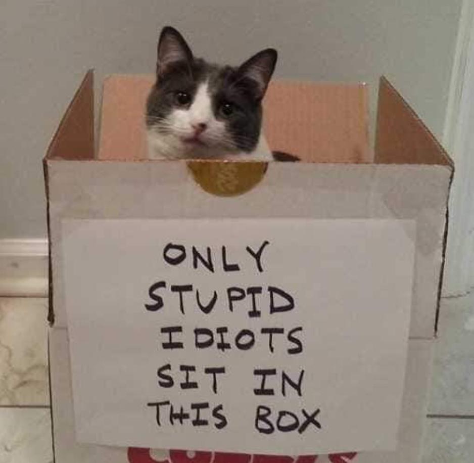 Haha cat is stupid - meme