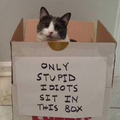 Haha cat is stupid