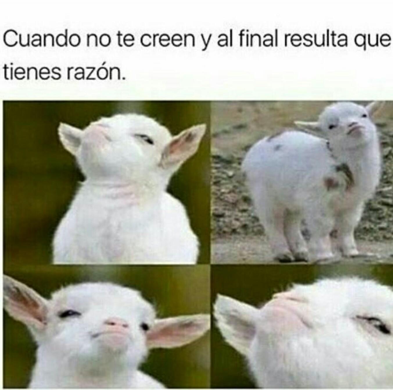 XD cierto jajaja - meme