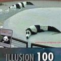 ILLUSION 100