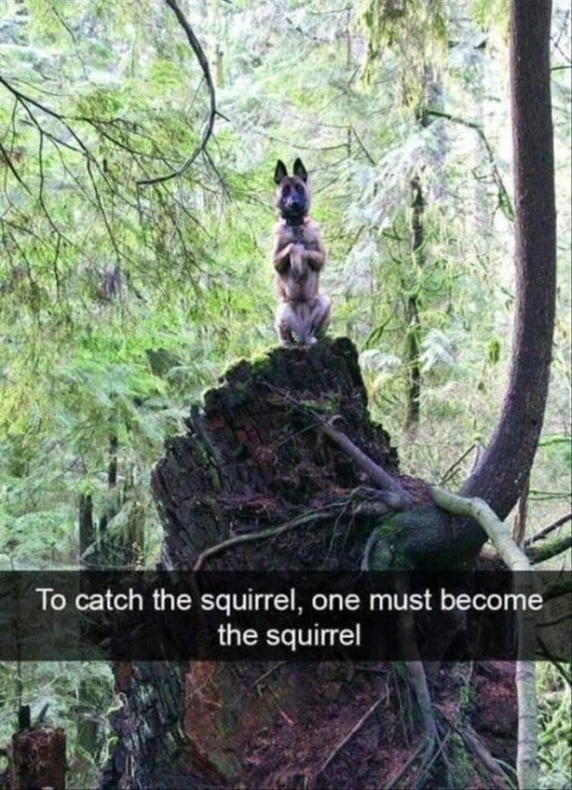 To catch the squirrel, one must become the squirrel - meme