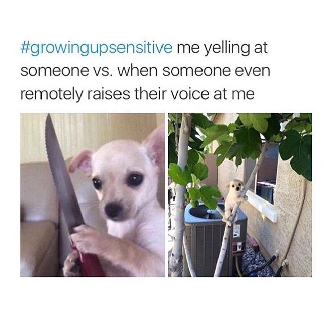 that doggo is cute - meme