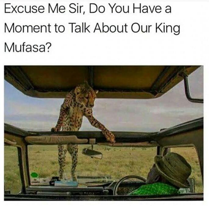 Mufasa is dead - meme