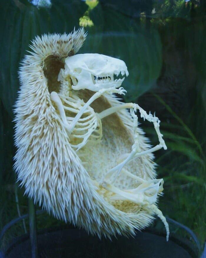 Esqueleto de Ouriço (Sonic) - meme