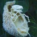 Esqueleto de Ouriço (Sonic)