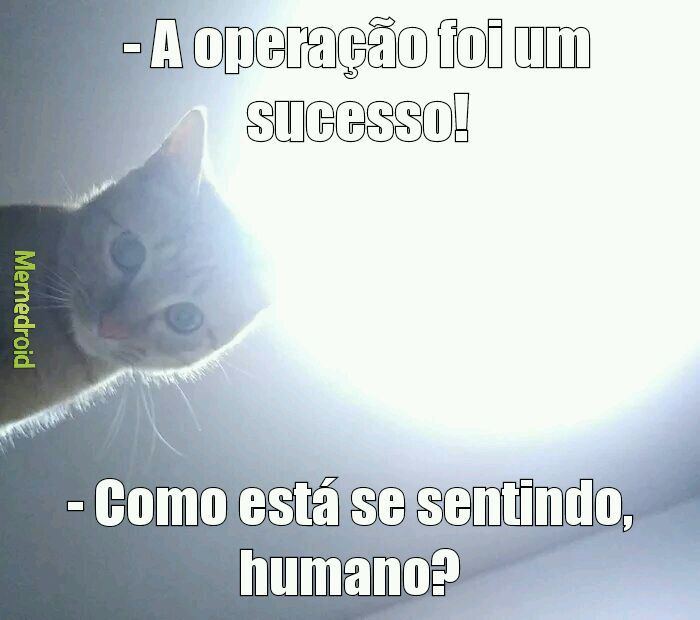 Gatos dominam - meme
