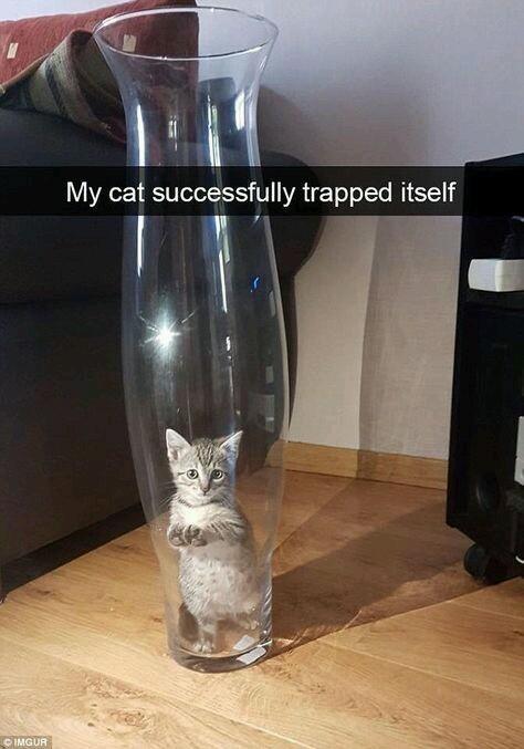 Cute cat trapped itself - meme