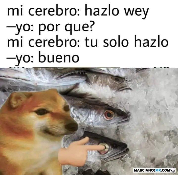 peces - meme