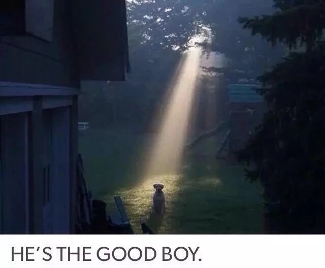 good boy - meme