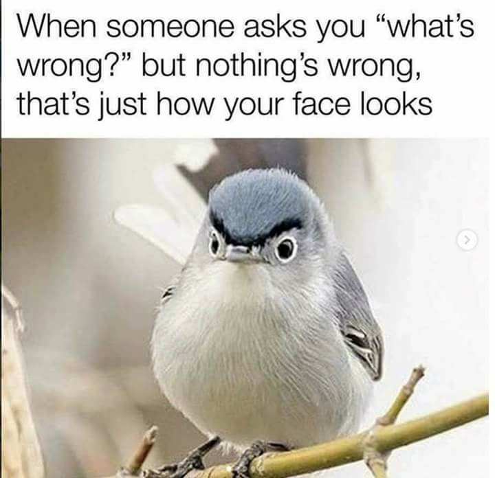 All the damn time - meme