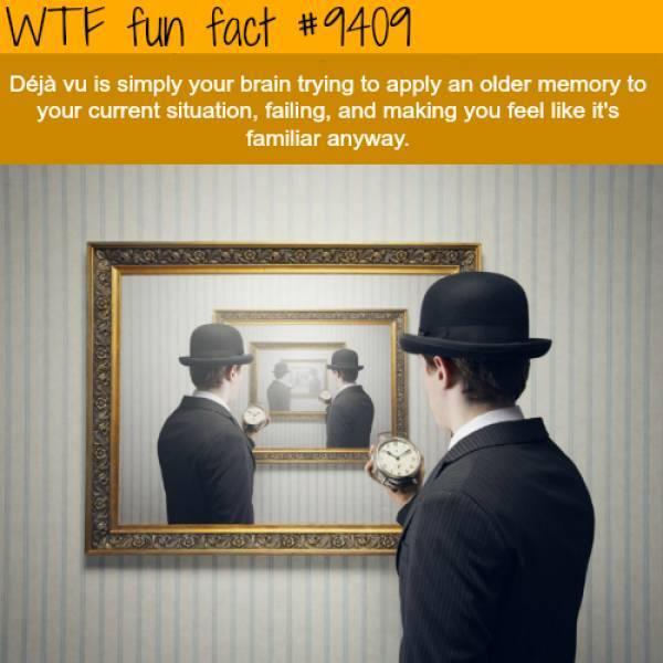 WOW! Interesting fact - meme