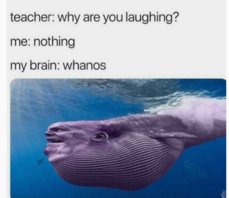 Hahaa, whanos - meme