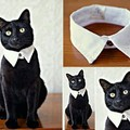 Looking smart cat