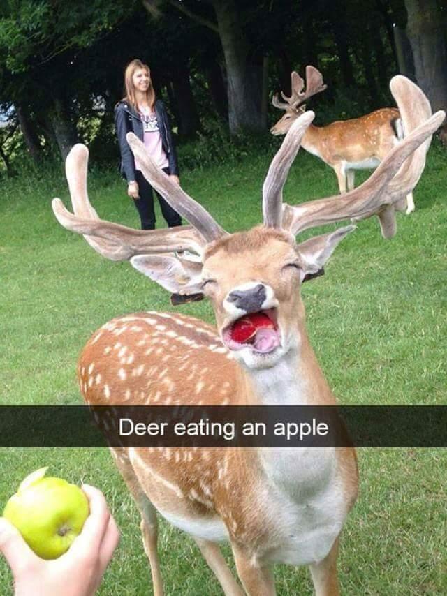 Deer apples - meme