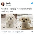 That dog.... Wholesome