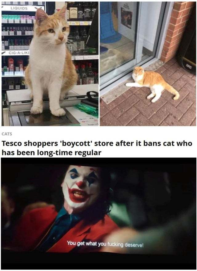 Tesco shoppers boycott store after it bans cat who has been long-time regular - meme